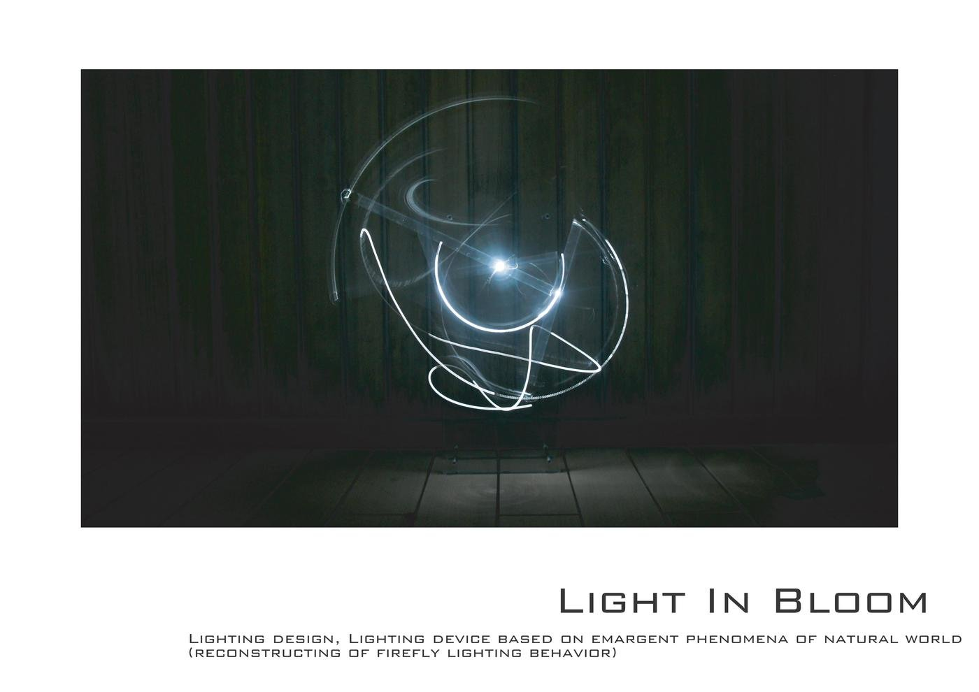 Light In Bloom イメージ 1