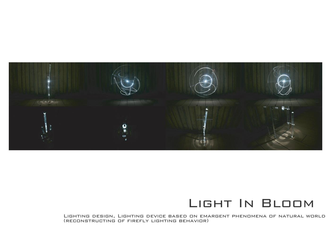 Light In Bloom イメージ 2